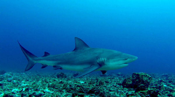 Diving in Guanacaste and Bat Island