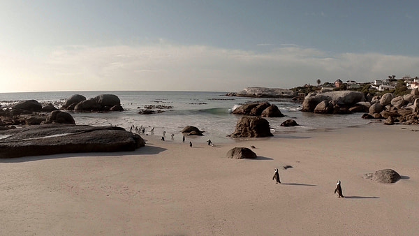 Best diving in South Africa